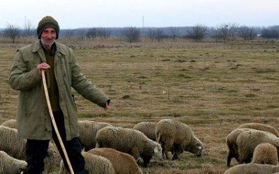 De goede herder (preek)