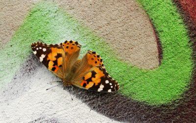 Kerk voor de rups of voor de vlinder?