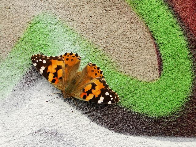 Vlinder, kleur